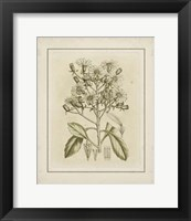 Framed Small Tinted Botanical I (P)