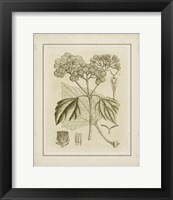 Framed Small Tinted Botanical IV (P)