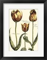 Framed Small DePasse Tulipa II (P)
