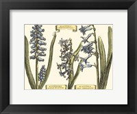 Framed Custom Hyacinth in Bloom (U)