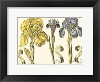 Framed Custom Iris in Bloom I (U)