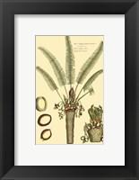 Framed Printed Exotic Palm III