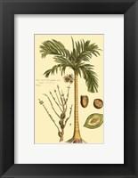 Framed Printed Exotic Palm V
