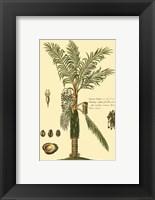 Framed Printed Exotic Palm VI