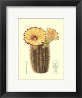Framed Flowering Cactus I