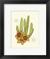 Framed Flowering Cactus III