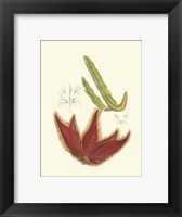 Framed Flowering Cactus IV