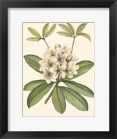 Framed Rhododendron