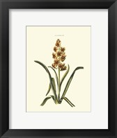 Framed Antique Hyacinth IX