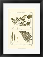 Framed Fern Classification IV