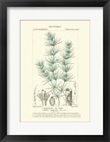 Framed Botany I