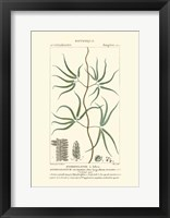 Framed Botany II