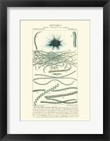 Framed Botany IV