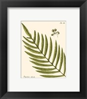 Framed Small Antique Fern I