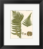 Framed Small Antique Fern III