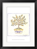 French Topiary I Framed Print
