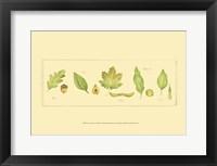 Framed Leaves & Seeds I
