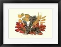 Framed Sm Wh Oak,Balsam Fir&Yw Birch