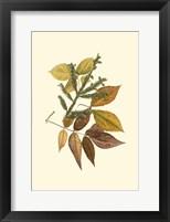 Framed Sm Elm, Spruce, Beech & Ash