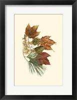 Framed Sm Red Maple,Tamarack & Wh Pine
