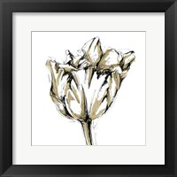 Framed Small Tulip Sketch I