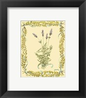 Small Lavender Framed Print