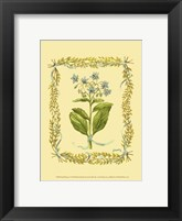Small Borage Framed Print
