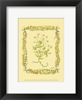 Small Chamomile Framed Print