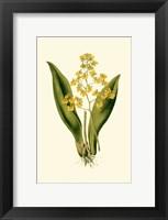 Framed Orchid Array I