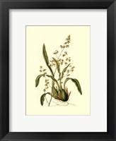 Framed Orchid Array IV