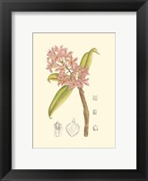 Framed Orchid Plenty III