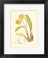 Framed Orchid Plenty IV