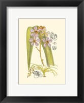 Framed Orchid Plenty V