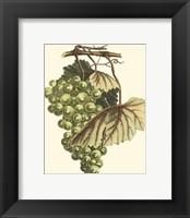 Vintner's Varieties I Framed Print