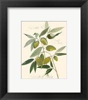 Framed Ascolane Olives