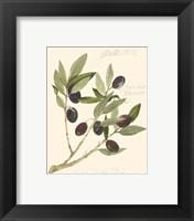Gaeta Olives Framed Print