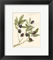 Framed Gaeta Olives