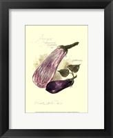 Aubergine Eggplant Framed Print