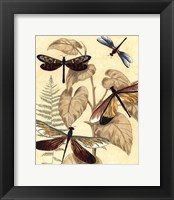 Framed Sm. Graphic Dragonflies II (P)
