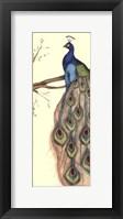 Small Rebecca's Peacock II (P) Framed Print