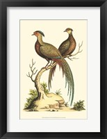 Framed Small Regal Pheasants II (P)