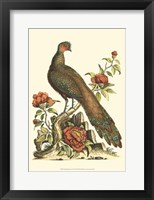 Framed Small Regal Pheasants III (P)