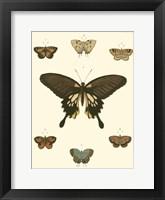 Framed Small Heirloom Butterflies I (P)