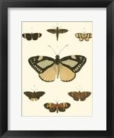 Framed Small Heirloom Butterflies II (P)