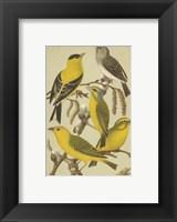 Framed Cassel's Petite Songbirds III
