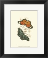Framed Butterflies II