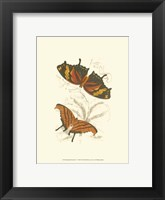 Framed Butterflies V