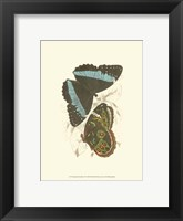 Framed Butterflies VI