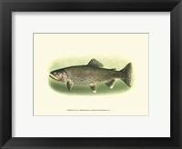 Framed River Trout I