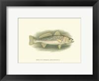Framed River Trout IV
